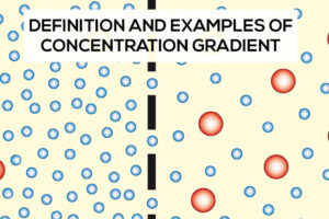 Concentration Gradient Definition